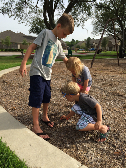 Chasing a tiny frog with William and Walker.