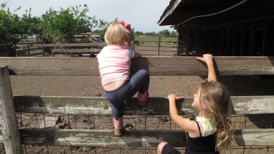 There was lots of fence climbing....