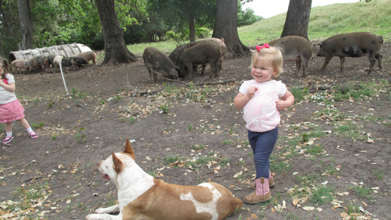 Checking out the hogs and dogs.