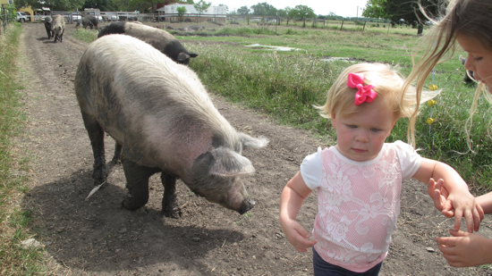 Poppyseed was a little nervous about the hogs.  Pretty much everything is free range at this farm!