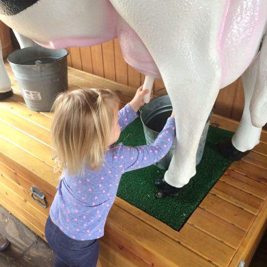 Milking Cow at Rodeo