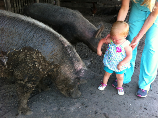 Poppyseed visiting with a happy hog.